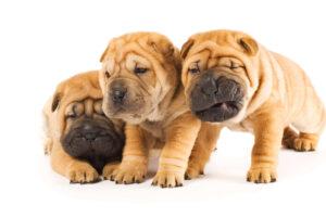 puppy school perth